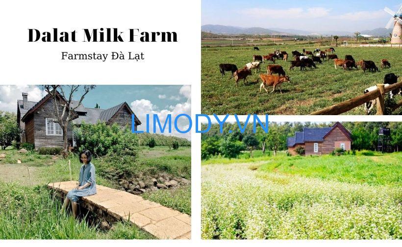 Top 10 Farmstay Đà Lạt có vườn farm view đẹp cho khách trải nghiệm